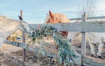 Horses & High Tea