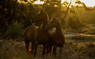 """""""Mijn paard kan niet aan een fotohalster stil staan!"""""""