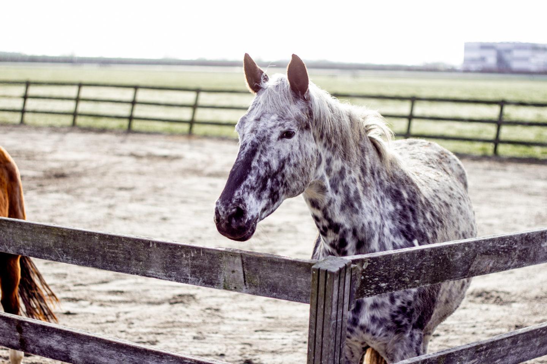 Officieel een trotse paardenmoeder: mijn Luus!