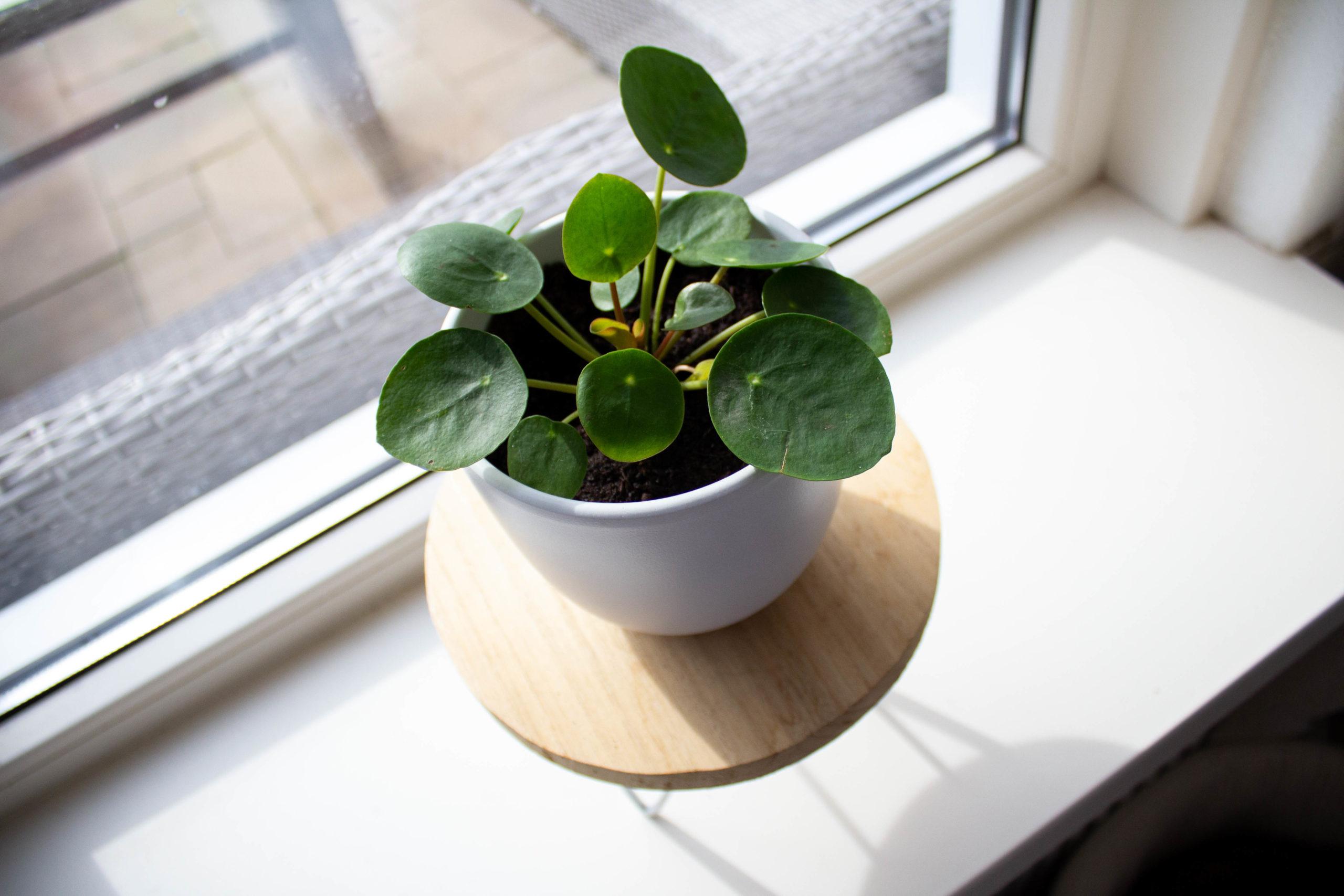 Groen in huis met makkelijke planten